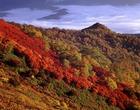 05.紅葉する山肌(9・10月)