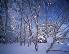 06.冬の樹林帯(11・12月)