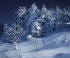 06.厳冬の樹々(11・12月)
