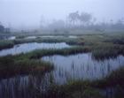 03.霧の沼ノ原湿原