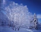 06.冬木立ち